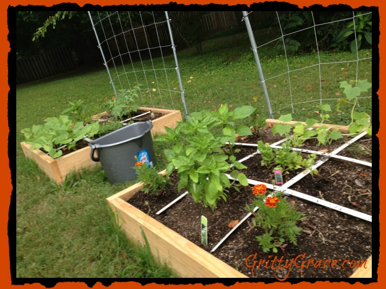 GARDENING WITH A SQUARE FOOT GARDEN…
