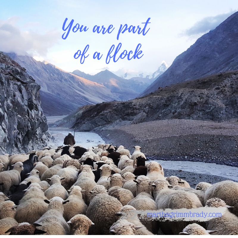 Why has our Shepherd placed us in a flock? One reason is for our protection.