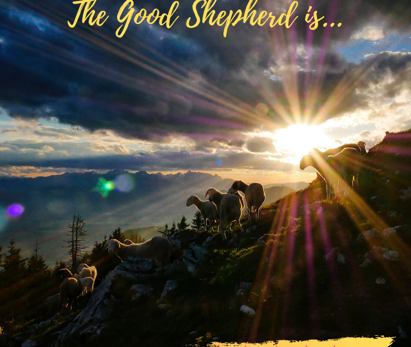 THE GOOD SHEPHERD GIVES HIS LIFE FOR HIS SHEEP…